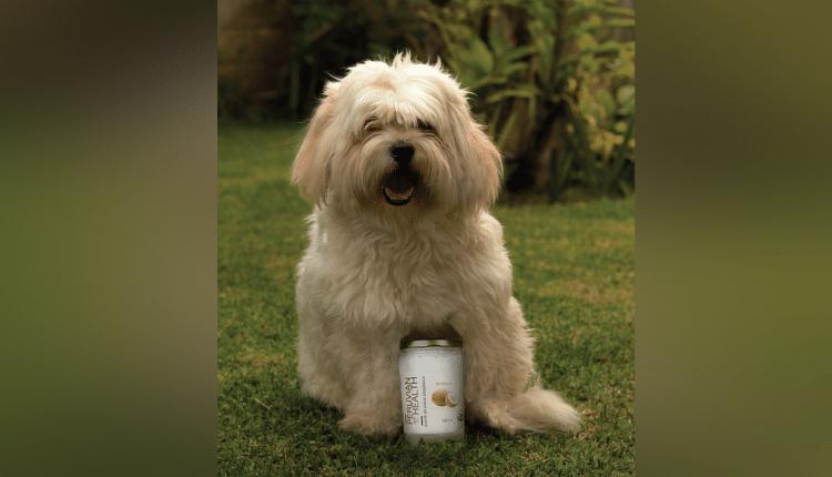 ¡Lo que el aceite de coco puede hacer por nuestros amigos de cuatro patas!